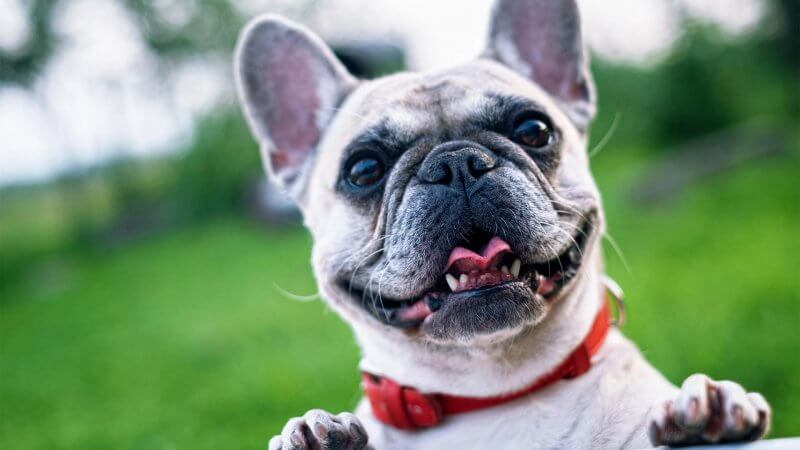 Feel Good Cosmetics Safe For Dogs