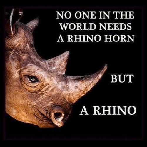 Rhino Horn Ad